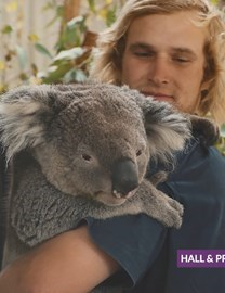 VIDEO: Introducing our sponsored koalas!